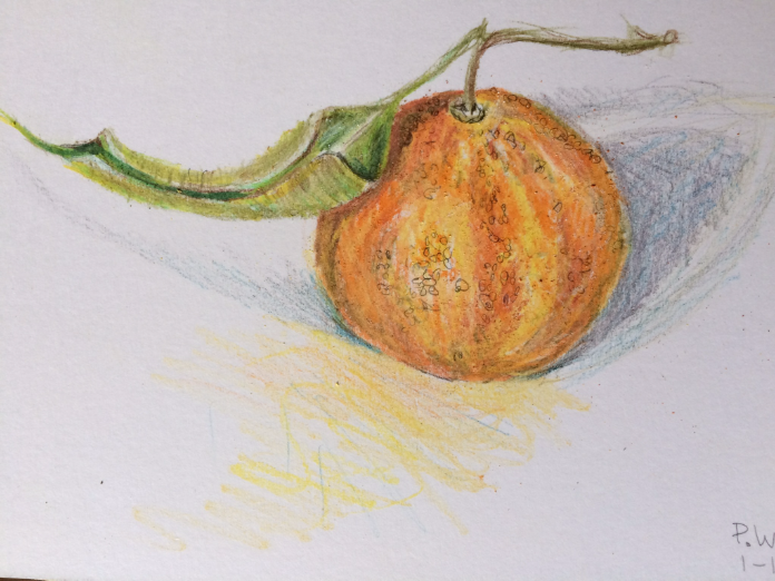 satsuma-watercolor-pencil-jan-1-2016