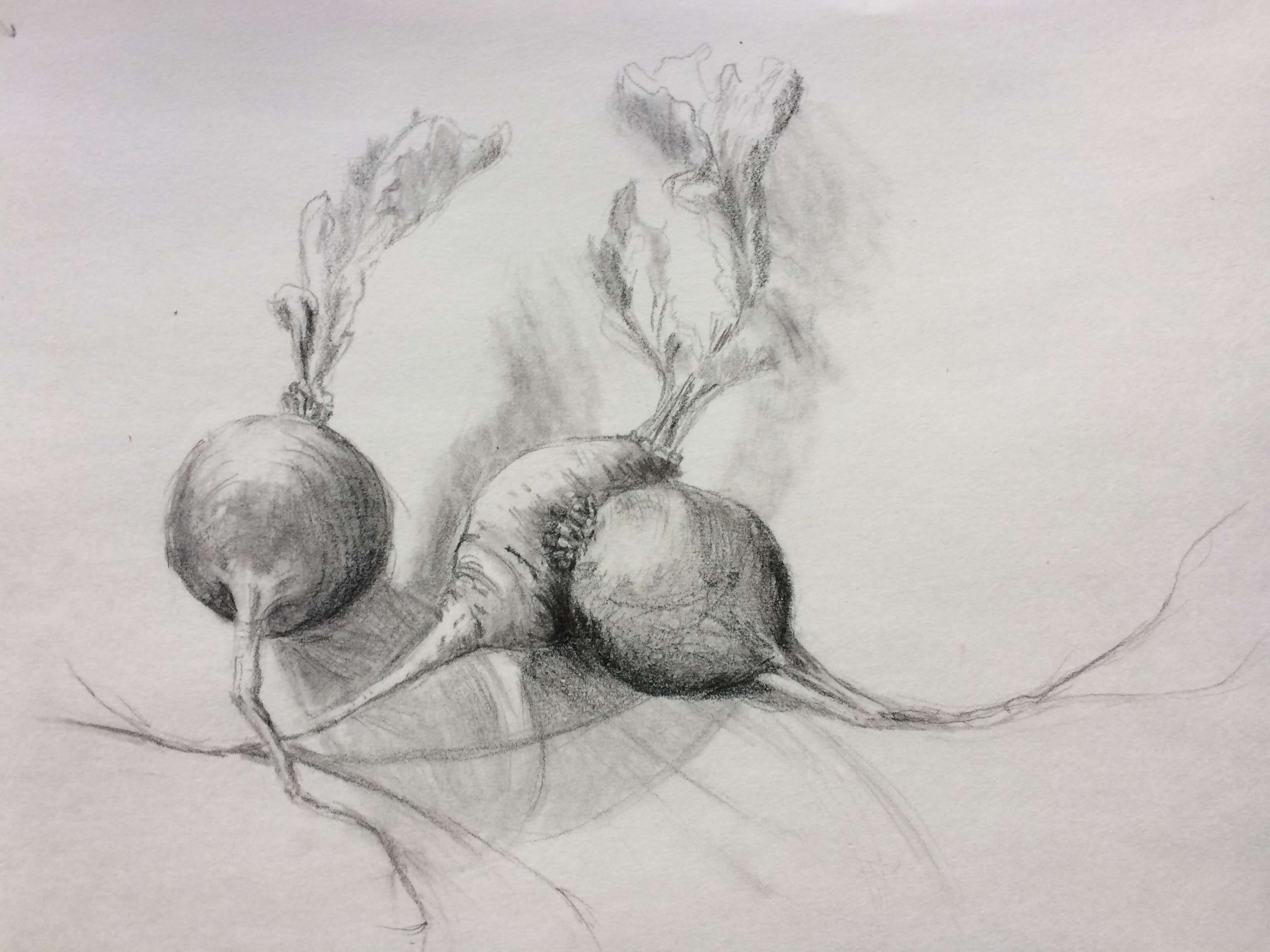 Radishes copyright Peggy Willett
