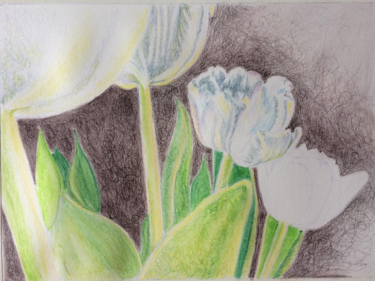Step 2 tulips