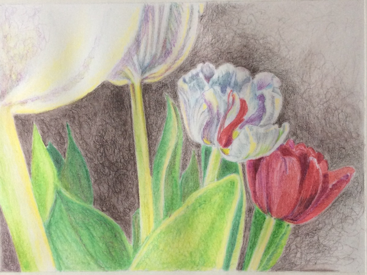 Step 3 tulips